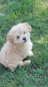 mollys-puppy